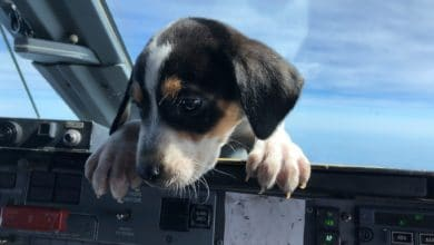 Photo of 225 animales del medio sur abordaron un vuelo para encontrar hogares permanentes