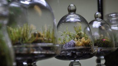 Photo of Terrarios: Una maravilla natural en un contenedor de cristal