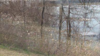 Photo of Se buscan voluntarios para limpiar el Wolf River Harbor