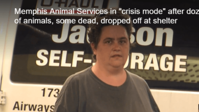 Photo of Mujer puede enfrentar cargos después de dejar a 30 animales en refugio para animales de Memphis