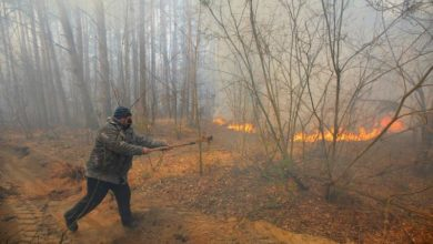 Photo of Wildfire near Chernobyl nuclear site extinguished