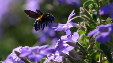 Photo of Dutch launch flower planting project to save bees