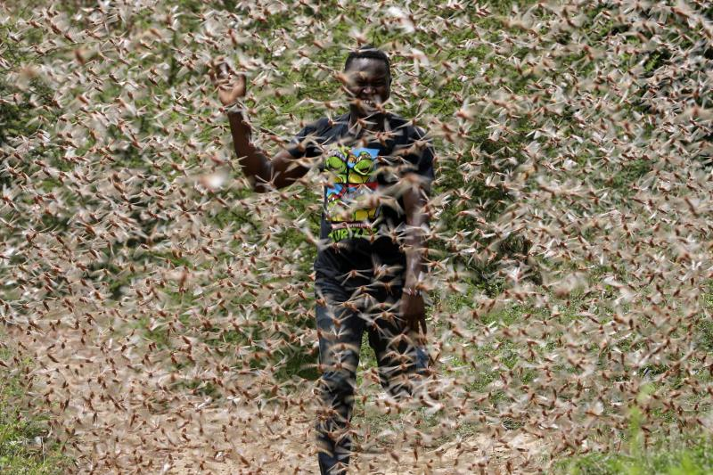 Africa locust plague threatens 5 million people - La ...