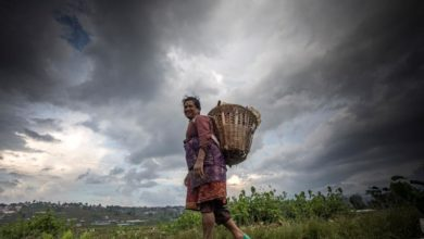 Photo of Nepalese farmers plant rice during monsoon season