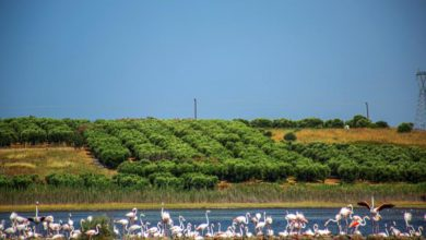 Photo of Flamings make a pit stop during migration