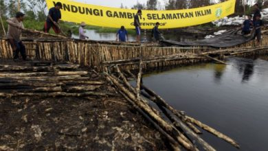 Photo of Greenpeace accuses Indonesian paper mill of destroying tropical peatlands