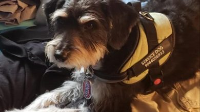 Photo of Police Ask for Help After Service Dog Scrappy Disappears