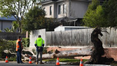 Photo of Strong storm kills 3 people, contaminates South Australia water supply