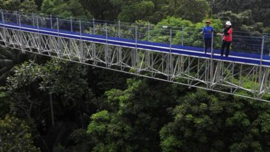 Photo of Don't look down: visitors enjoy epic view of Kuala Lumpur forest 50 meters up