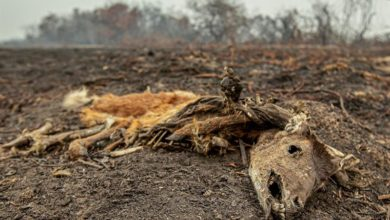 Photo of Why Brazil's Pantanal is having the worst fires in recent decades