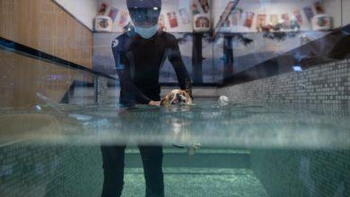 Photo of Hong Kong's pet businesses tackle ruff times