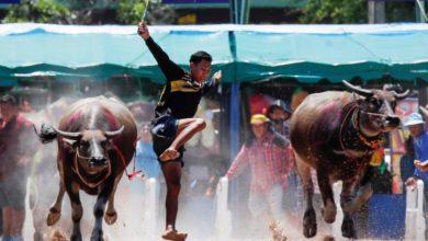 Photo of Buffalo Racing Festival in Chonburi province, Thailand